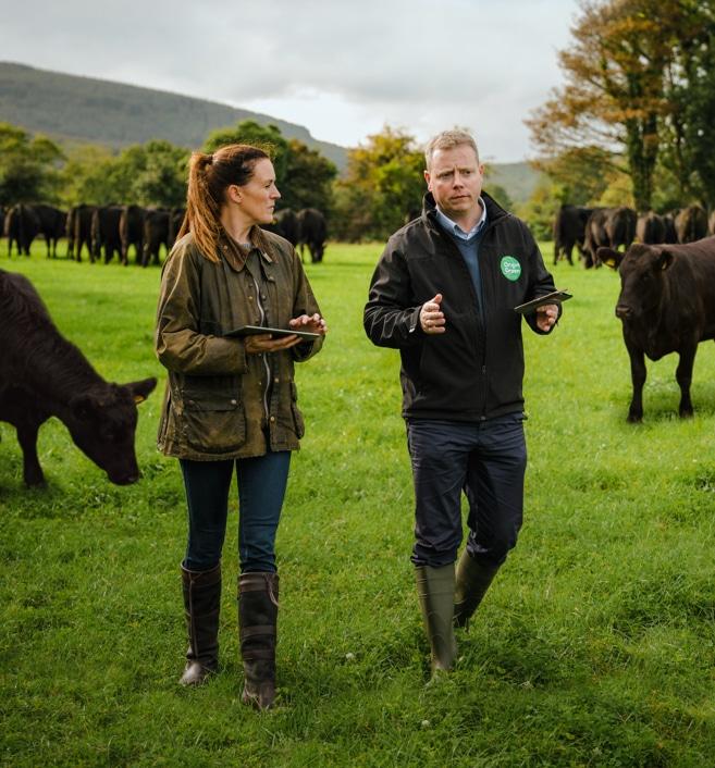 L'élevage en Irlande
