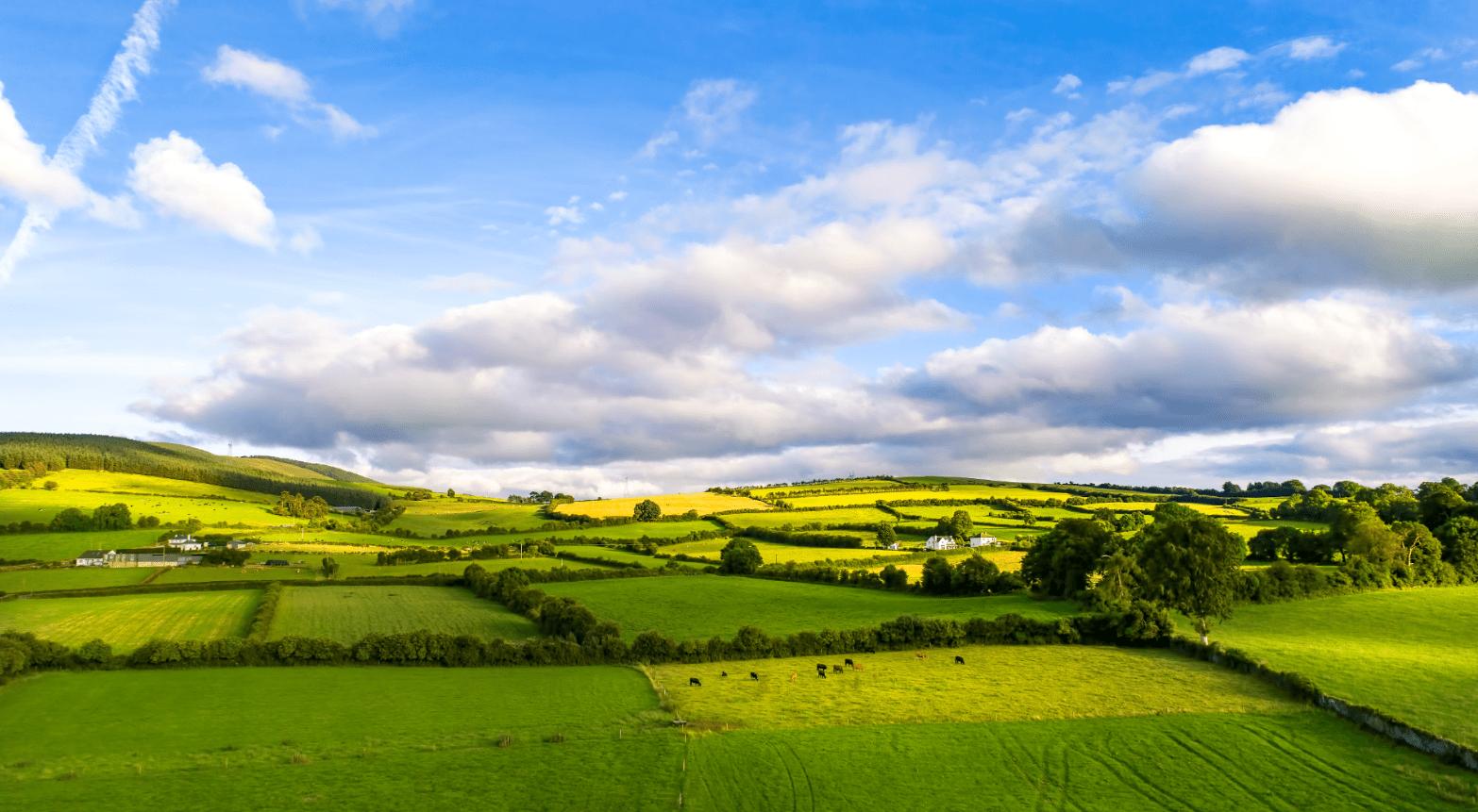 Durabilité - Le bœuf Irlandais